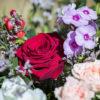 jane-luce-bouquets-enidee-3