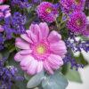 jane-luce-bouquets-l-ambroise-3