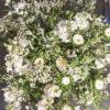 jane-luce-bouquets-la-ribambelle-2