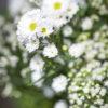 jane-luce-bouquets-la-ribambelle-3