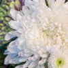 jane-luce-bouquet-deuil-bouquet-bulle-2