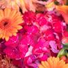 jane-luce-bouquets-deuil-dessus-cercueil-2
