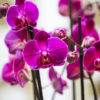jane-luce-bouquet-tresor-2
