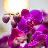 jane-luce-bouquet-tresor-3